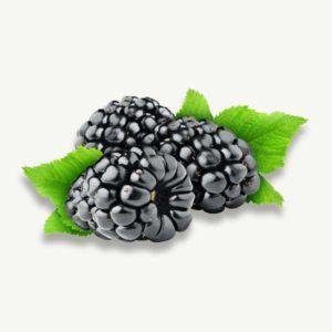 Organic Black Berry